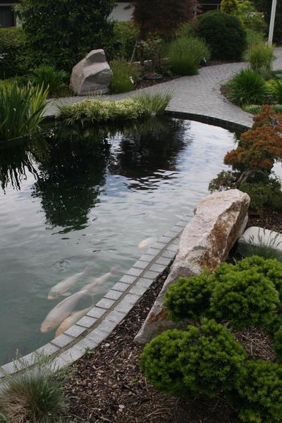 As aberle ii le petit bassin for Petit bassin
