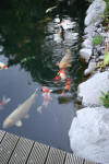 Garden party in Germany - le bassin - the pond 2  39