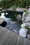 Garden party in Germany - le bassin - the pond 2  33