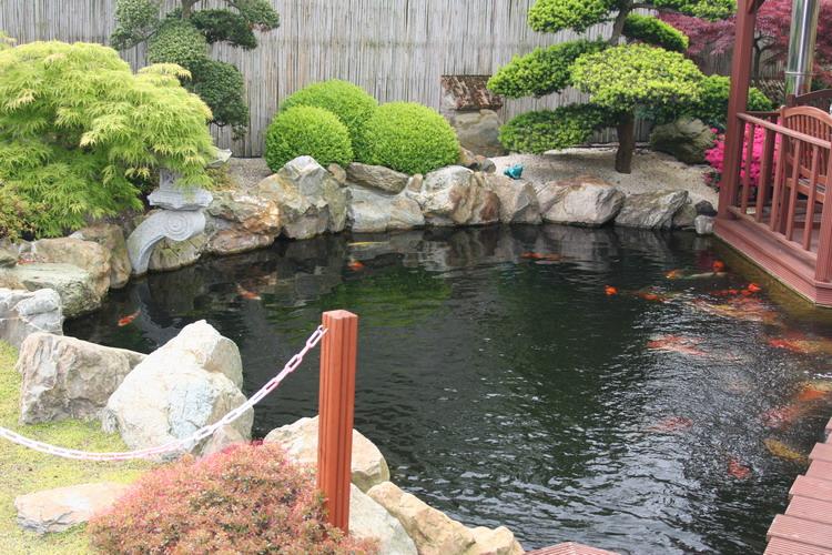 Koï San Belgique - Le jardin Japonais