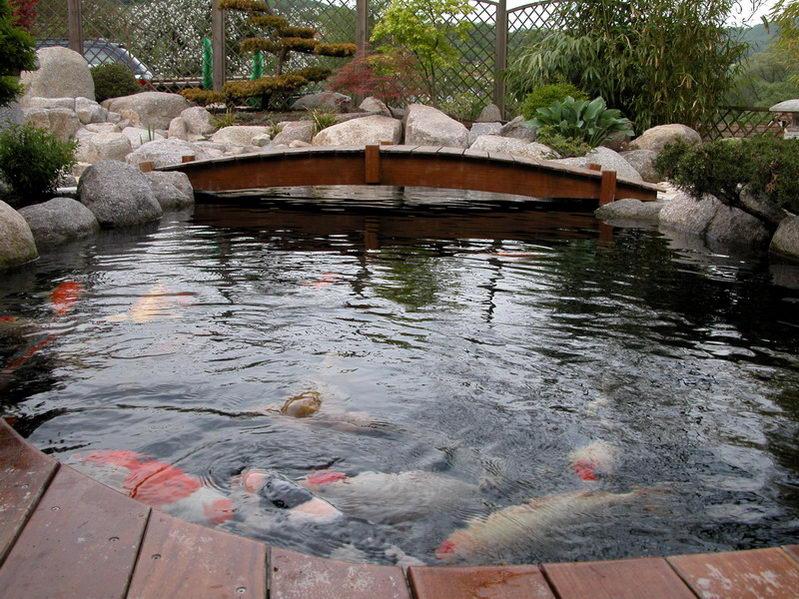 bassin a ko et jardin japonais richert 2 les finitions. Black Bedroom Furniture Sets. Home Design Ideas
