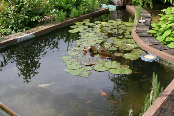 Aquamarathon alsacien un bassin de jardin à lagunage