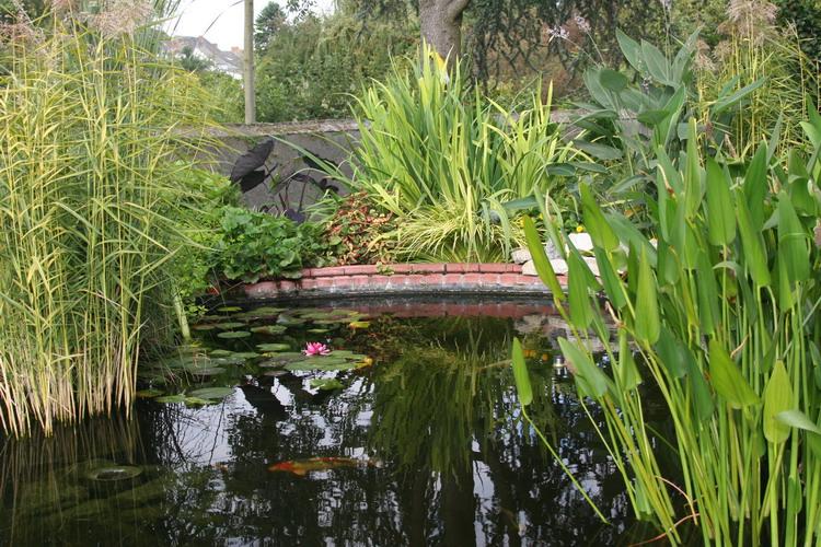 Les bassin de jardin de bouda le bassin de jardin principal for Jardin principal