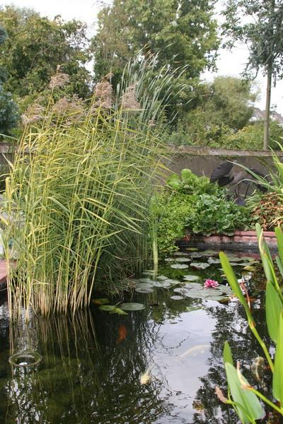 Les bassin de jardin de Bouda le bassin de jardin principal