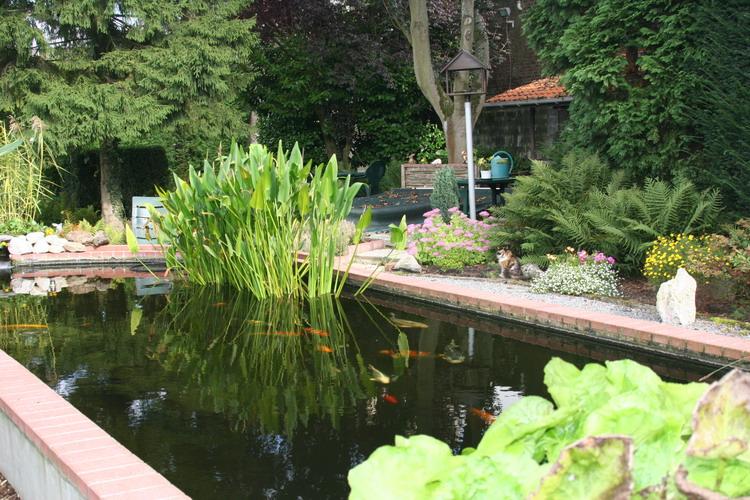 Les bassin de jardin de bouda le bassin de jardin for Jardin principal