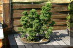 Maillot bonsai demo 2  9