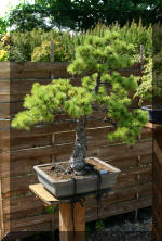 Maillot bonsai demo 2  5