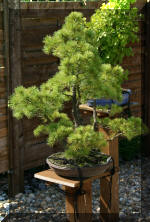 Maillot bonsai demo 2  3