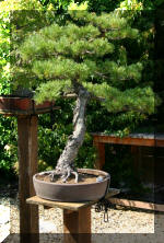 Maillot bonsai demo 2  1