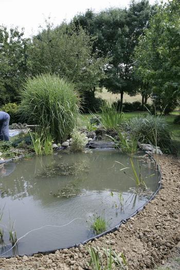 R habiltation d 39 un bassin du branois plantation des - Plantation autour d un bassin ...