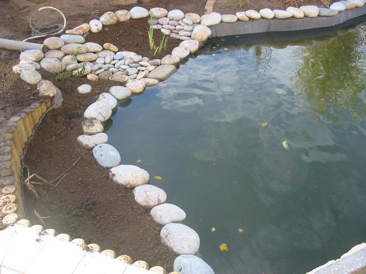 Am nagement du jardin aquatique de patrick les abords for Construction bassin aquatique
