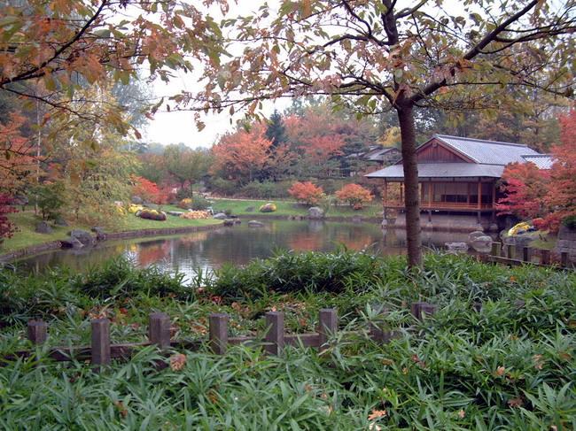 Le jardin japonais de hasselt chrysanth mes 3 for Jardin japonais hasselt 2016