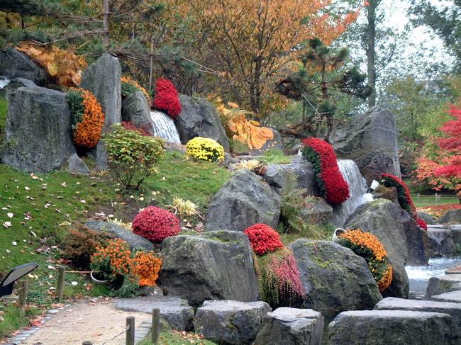 Le Jardin Japonais De Hasselt Chrysanthemes 5