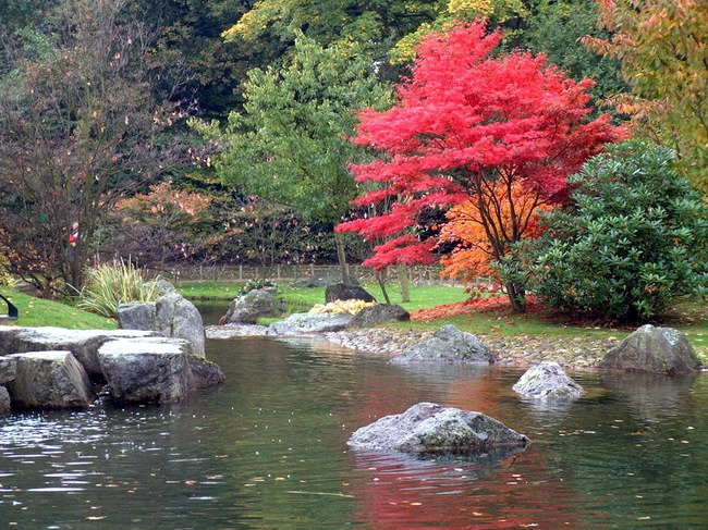 Plantes jardin japonais photos de conception de maison for Accessoire jardin japonais