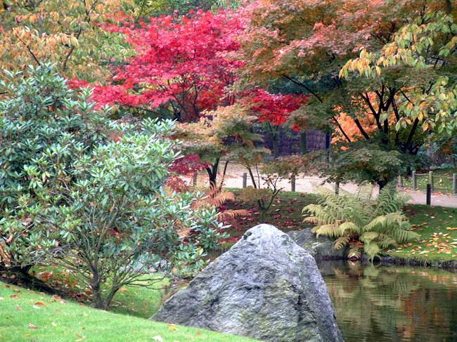 Le jardin japonais de hasselt chrysanth mes 5 for Jardin japonais hasselt 2016