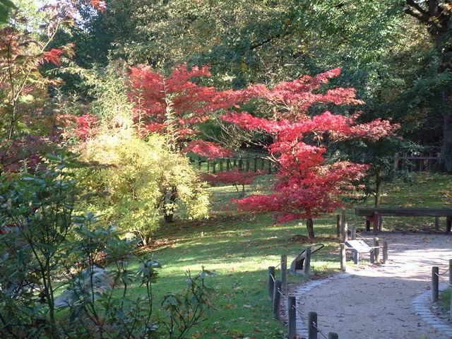 Le jardin japonais de hasselt automne 2 for Jardin japonais hasselt 2016