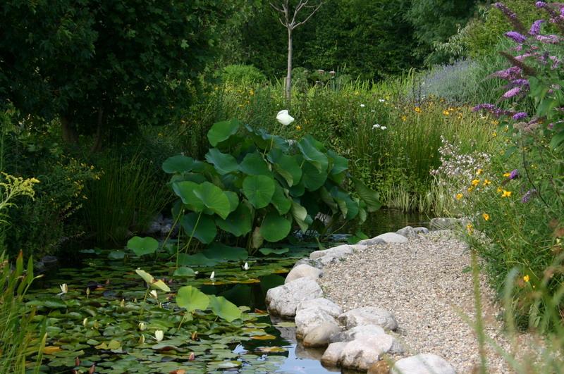 Jardin aquatique 1 for Jardin aquatique