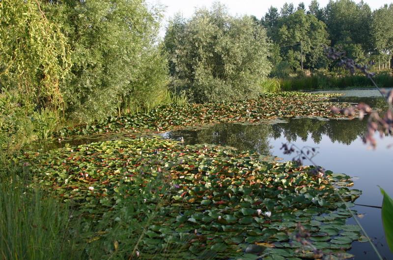 Jardin aquatique 3 for Jardin aquatique