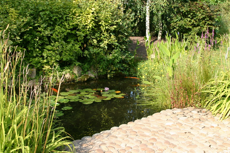 Jardin aquatique 5 for Jardin aquatique