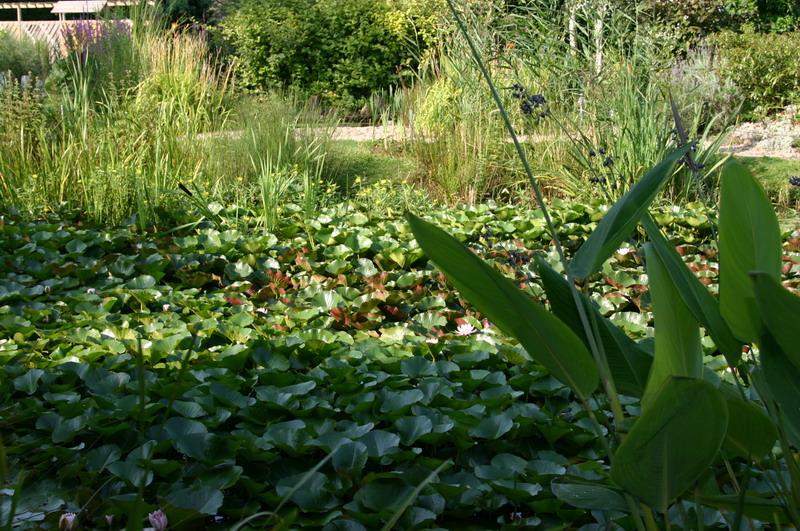 jardin aquatique 5