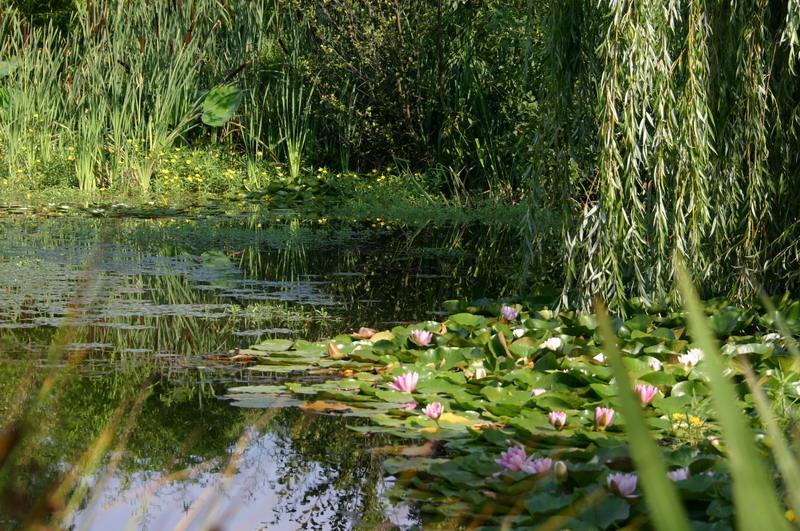 Jardin aquatique 6 for Jardin aquatique