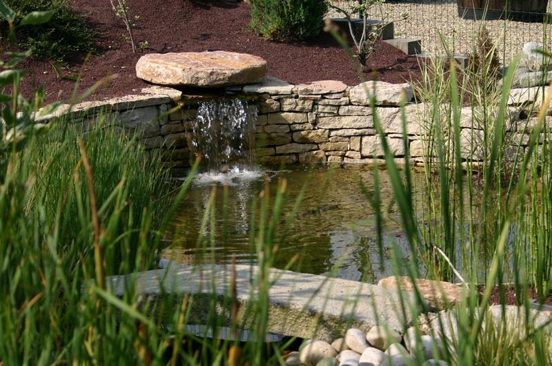 Jardin aquatique 8 for Jardin aquatique