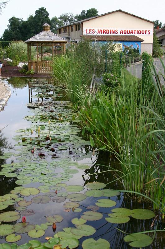 Jardin aquatique 9 for Jardin aquatique