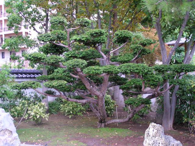 Le jardin japonais de monaco for Jardin japonais monaco
