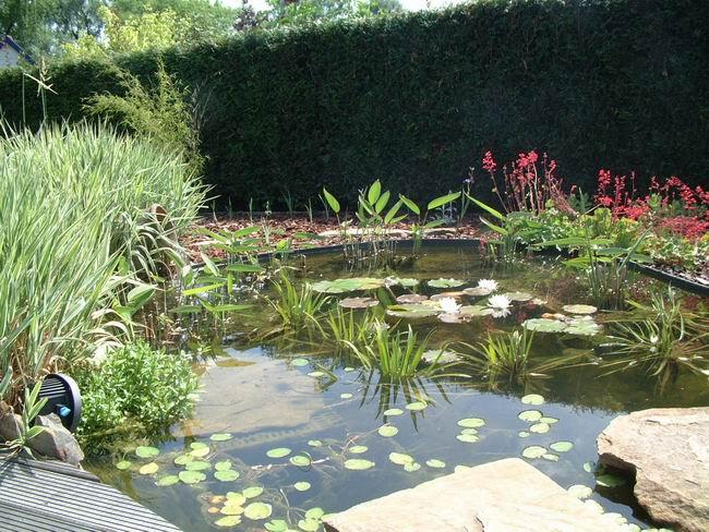Le jardin aquatique de scoubidou for Jardin aquatique