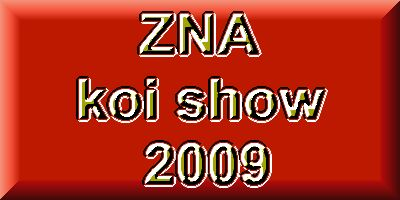 The day beafore the ZNA koi show  1