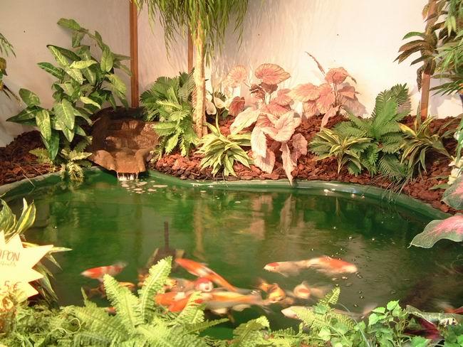Les jardins aquatiques le magasin for Materiel bassin aquatique