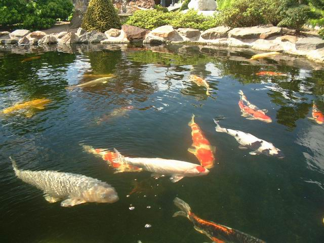 Awesome etang de jardin polyester pictures design trends for Deco bassin koi
