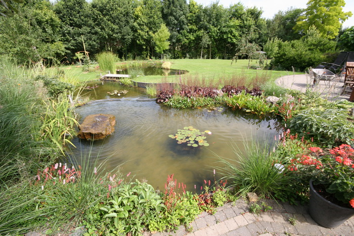 Bassin de jardin naturel lasne for Jardin naturel