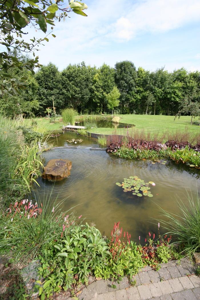 Bassin de jardin naturel lasne vue g n rale - Bassin naturel jardin rouen ...