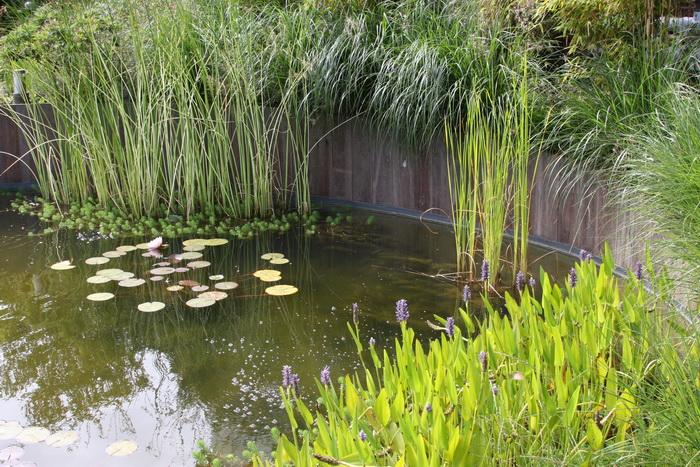 D co abris de jardin quimper avignon 32 avignon abris - Deco bassin de jardin avignon ...