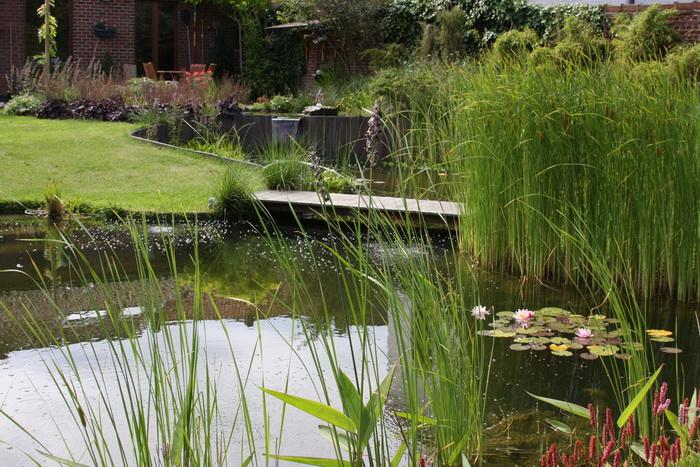 Bassin de jardin naturel lasne d tails 2 for Bassin naturel jardin