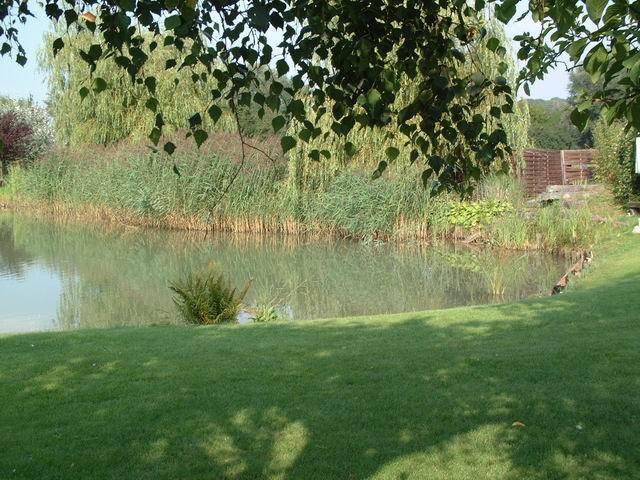 Marie paul et un bassin d 39 argile - Bassin canard mauritius saint paul ...