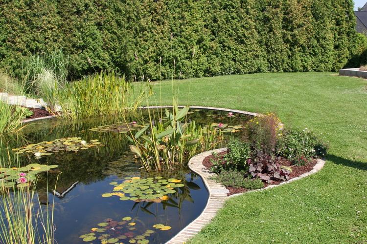 le bassin de jardin naturel de mimulus. Black Bedroom Furniture Sets. Home Design Ideas