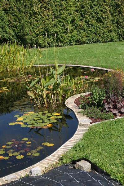 le bassin de jardin naturel de mimulus 2. Black Bedroom Furniture Sets. Home Design Ideas