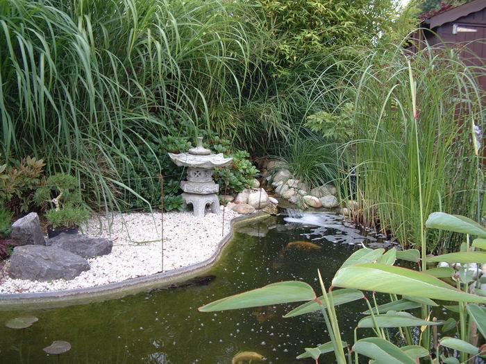 Le bassin de jardin de julien - Bassin poisson cascade creteil ...