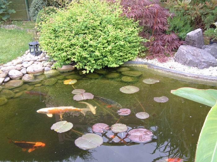 Cascade et lanterne - Bassin poisson cascade creteil ...