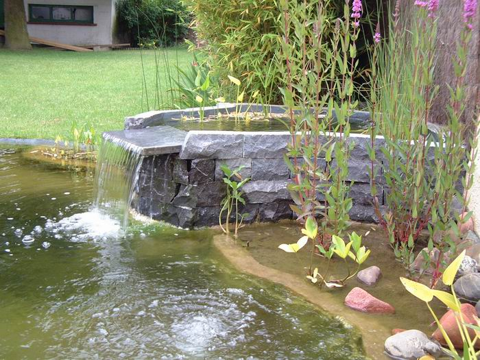 Le bassin de jardin de marc for Plante bassin poisson
