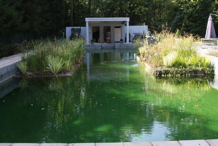 Piscine transform e en piscine biologique la filtration for Piscine biologique