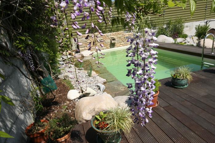 mini piscine biologique et bassin de jardin. Black Bedroom Furniture Sets. Home Design Ideas
