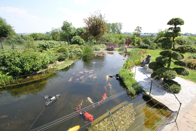 Aquatechnobel le bassin de jardin de francis for Photo bassin de jardin