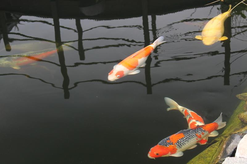 Nordic pond tour 1 IMG_2735