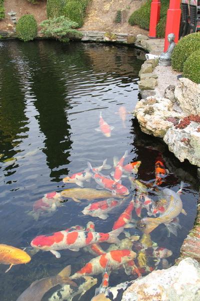 Johny Lievens pond