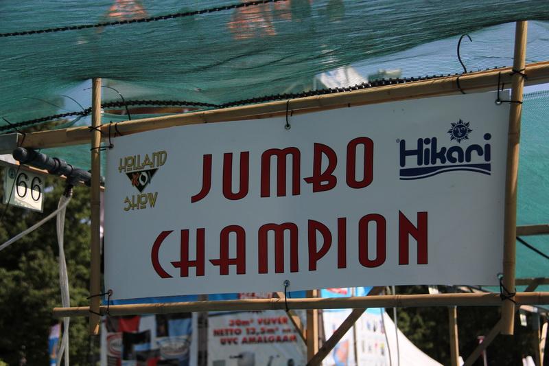 jumbo champion